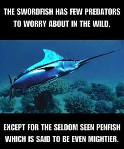 swordfish penfish