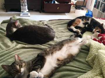 cat trio sickbed