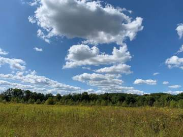 irvine field view