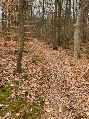 woods pic